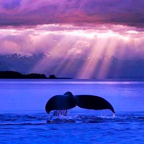 Swim Into The Deep Oceans