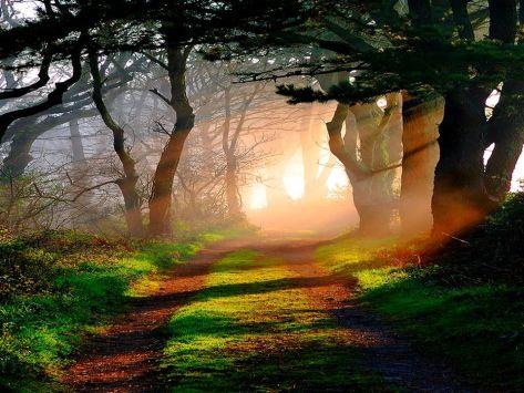 An early morning walk